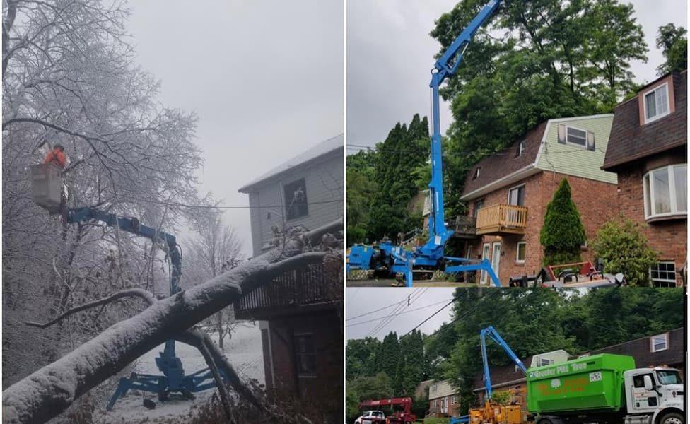 emergency-tree-service