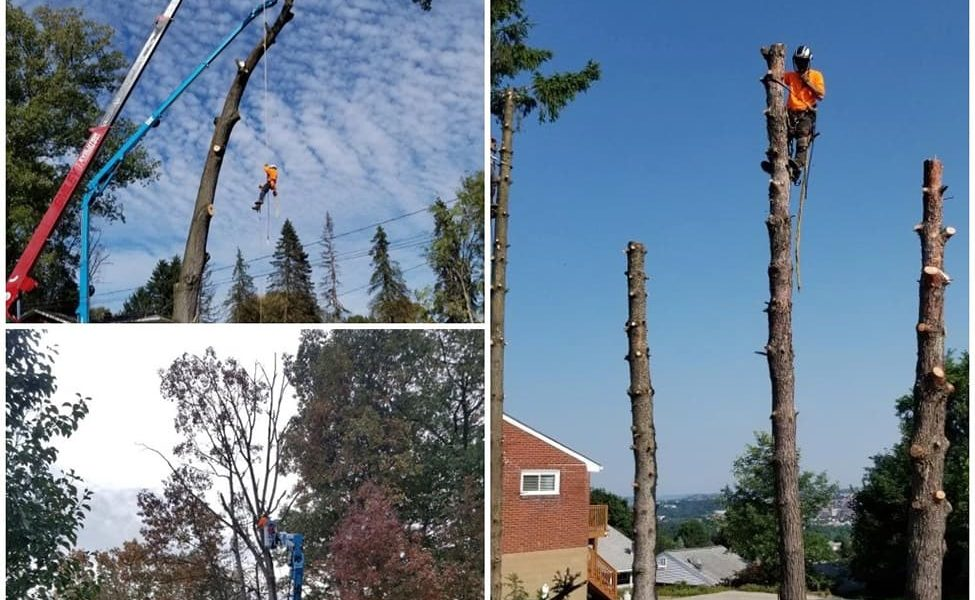 tree-pruning-trimming-services