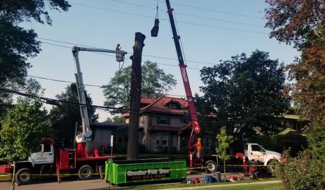 Tree removal service in Pittsburgh, PA by the team at Greater Pitt Tree Service LLC