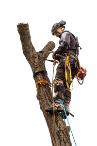 about-greater-pitt-tree-service-llc-pittsburgh-pa