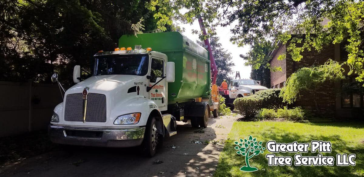 Tree Service Company Greater Pittsburgh PA