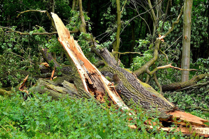 what-to-do-tree-struck-by-lightning