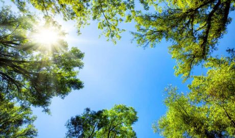 Summer Time Tree Care Tips