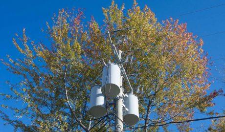 Tree-Care-Powerline-tips
